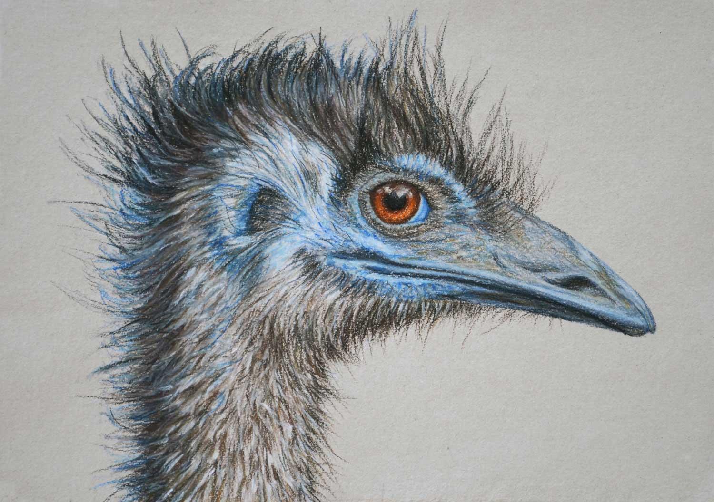 Emu 21 x 30 cm  Pastel on handmade paper  Sold