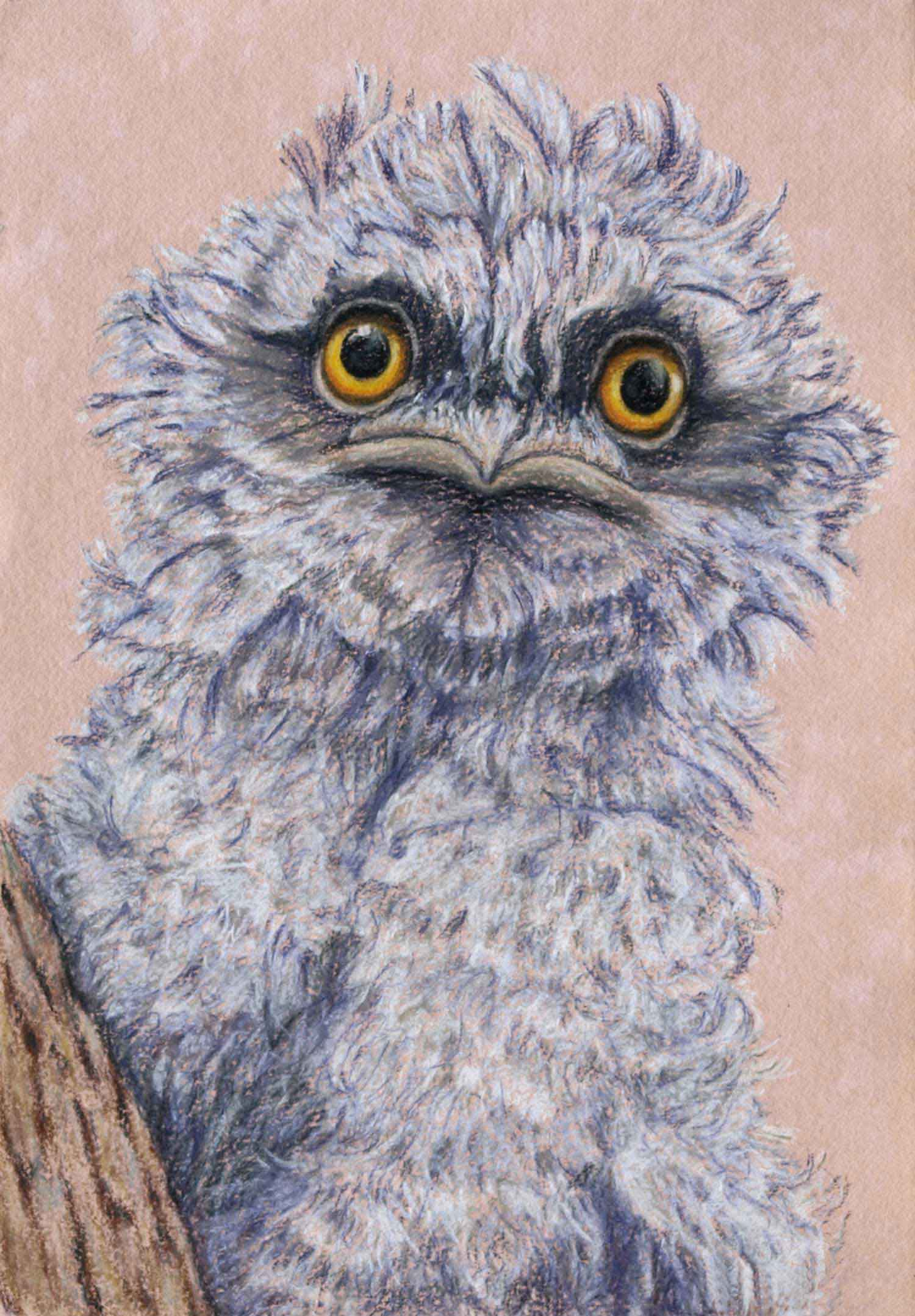 tawny frogmouth chick 30 x 21 cm  Pastel on handmade paper  SOLD