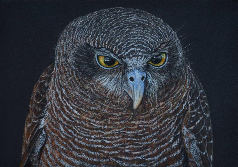 Rufous Owl II 21 x 30 cm  Pastel on handmade paper  SOLD