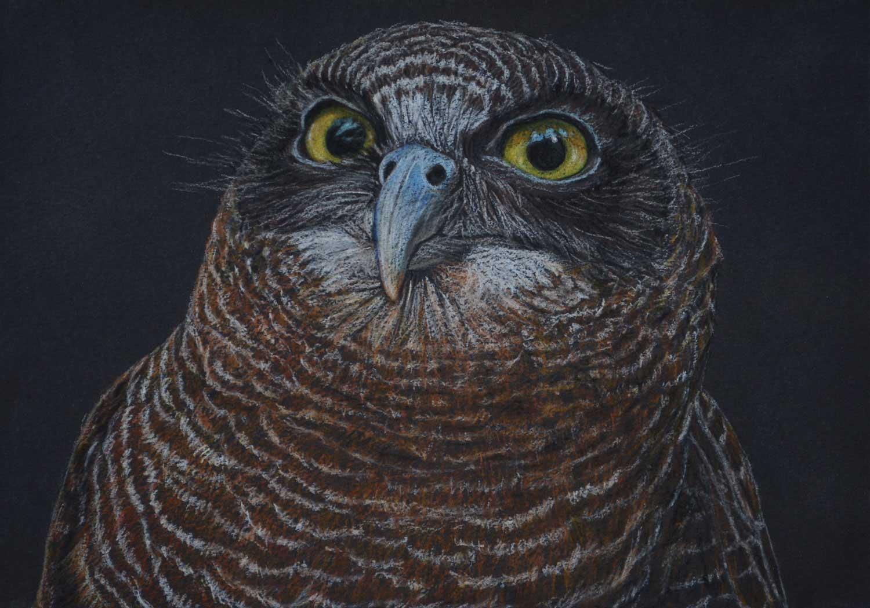 Rufous Owl 21 x 30 cm  Pastel on handmade paper  SOLD