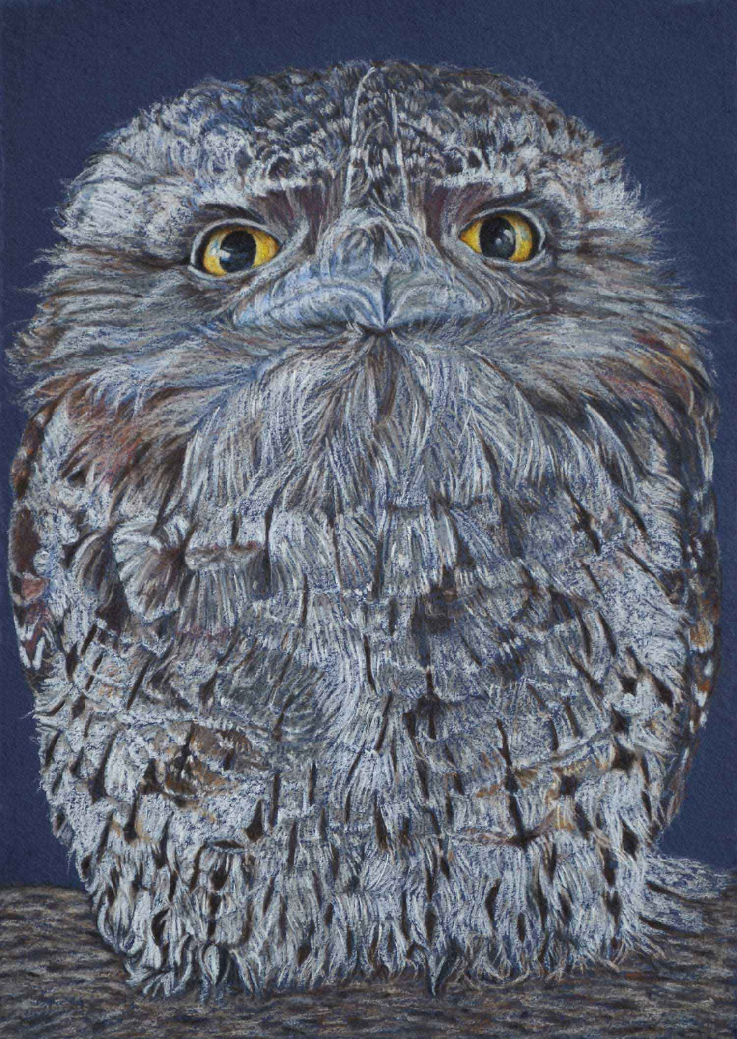 Tawny Frogmouth II 30 x 21 cm  Pastel on handmade paper  SOLD