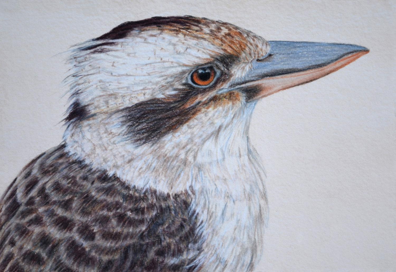Kookaburra III 21 x 30 cm  Pastel on handmade paper  SOLD