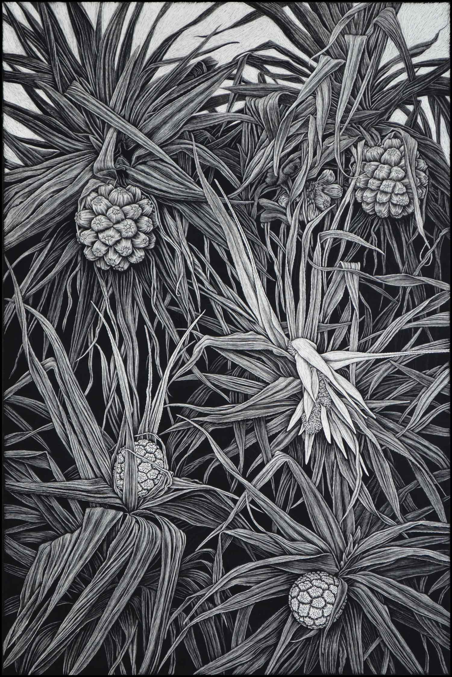 Pandanus in Flower (black & white version)  91.5 x 61 cm,  Edition of 50  PIGMENT ON COTTON RAG PAPER  $1,650