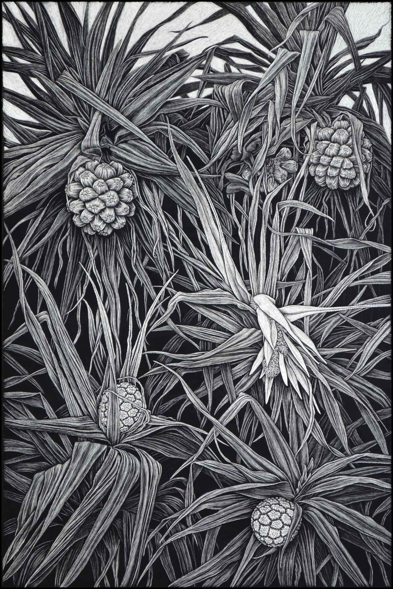 pandanus-in-flower-rachel-newling