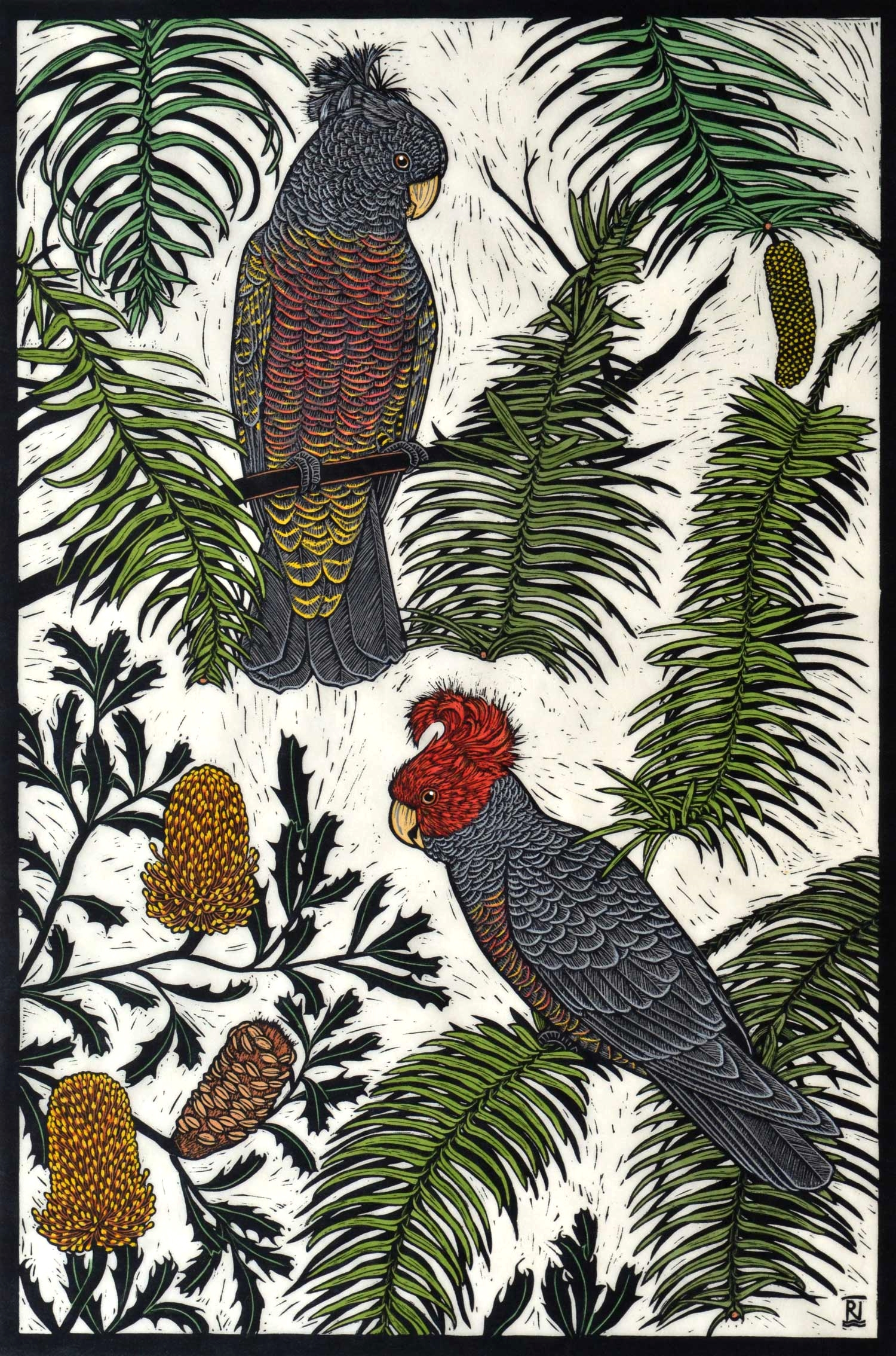 GANG-GANG COCKATOO & WOLLEMI PINE  75 X 50 CM EDITION OF 50  HAND COLOURED LINOCUT ON HANDMADE JAPANESE PAPER  $1,550