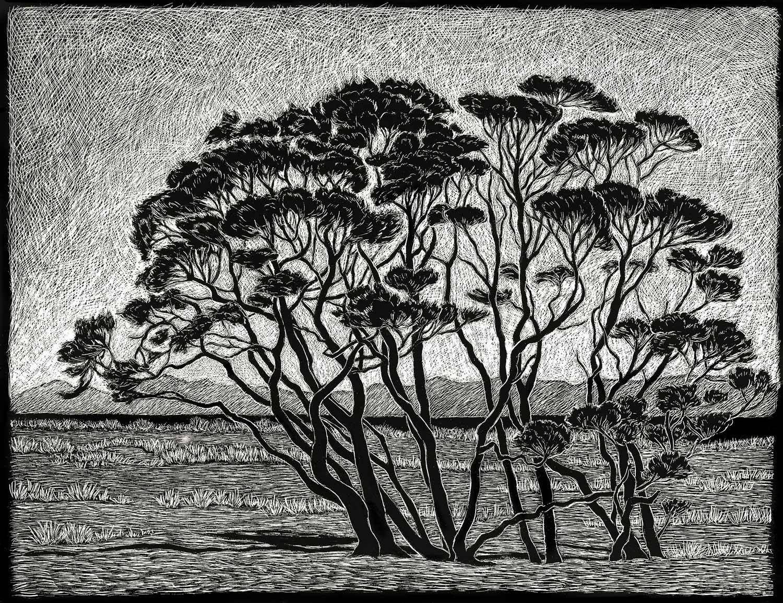Manuka Trees  35 x 45 cm, Edition of 50  pigment on cotton rag paper  $750