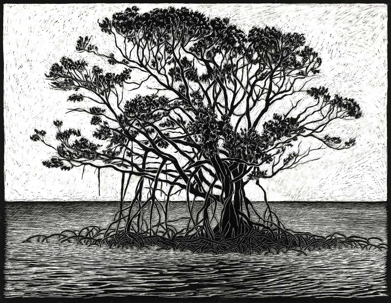 Mangrove  35 x 45 cm, Edition of 50  pigment on cotton rag paper  $750