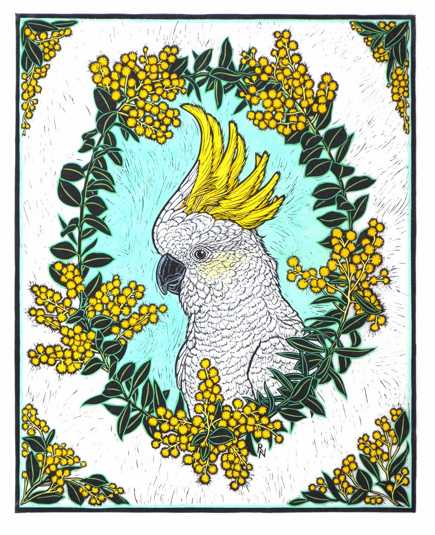 White Cockatoo and wattle  48 x 38.5 cm Edition of 50  Hand Coloured linocut on handmade japanese paPER  $1,100