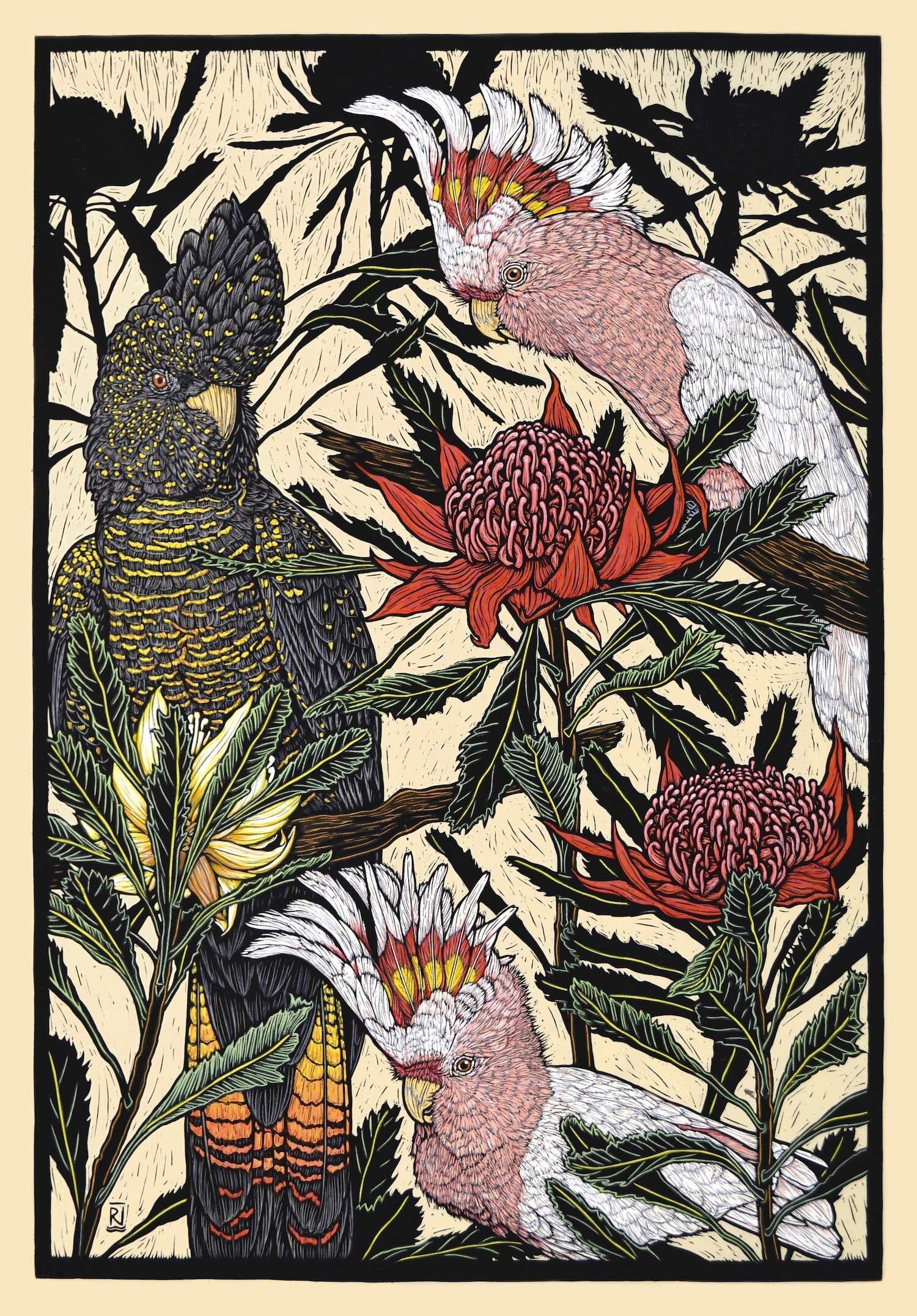 major mitchell cockatoo & red-tailed black cockatoo with waratah  76 x 51 Cm, Edition of 50  Hand-Coloured Linocut on Handmade Japanese paper  $1,700