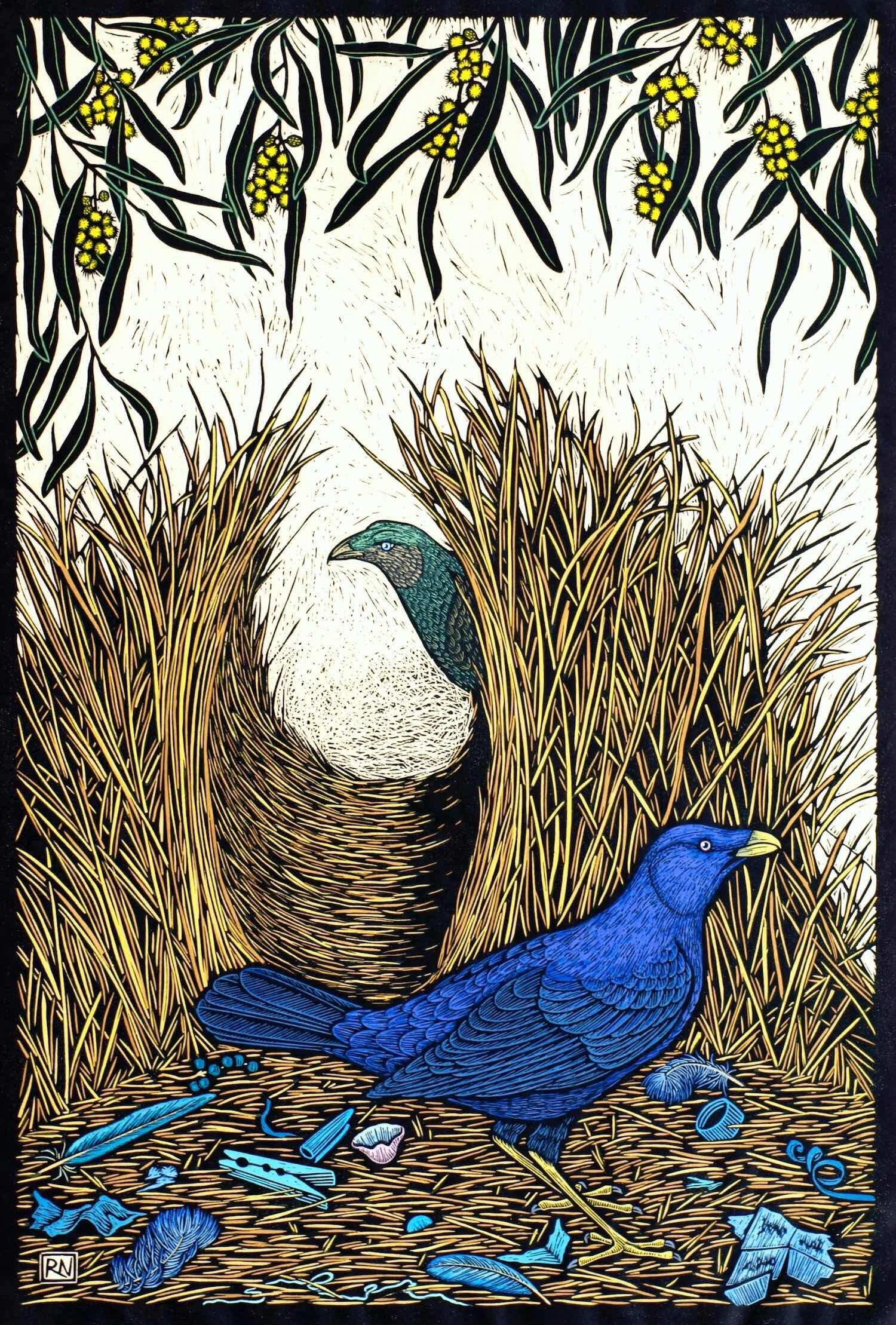 SATIN BOWERBIRD  74 X 50 CM, EDITION OF 50  HAND-COLOURED LINOCUT ON HANDMADE JAPANESE PAPER  $1,700
