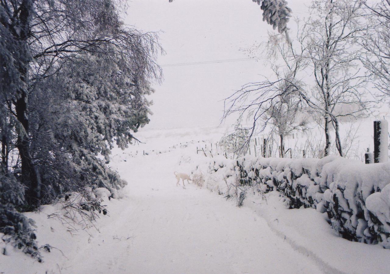 snow_road.jpg