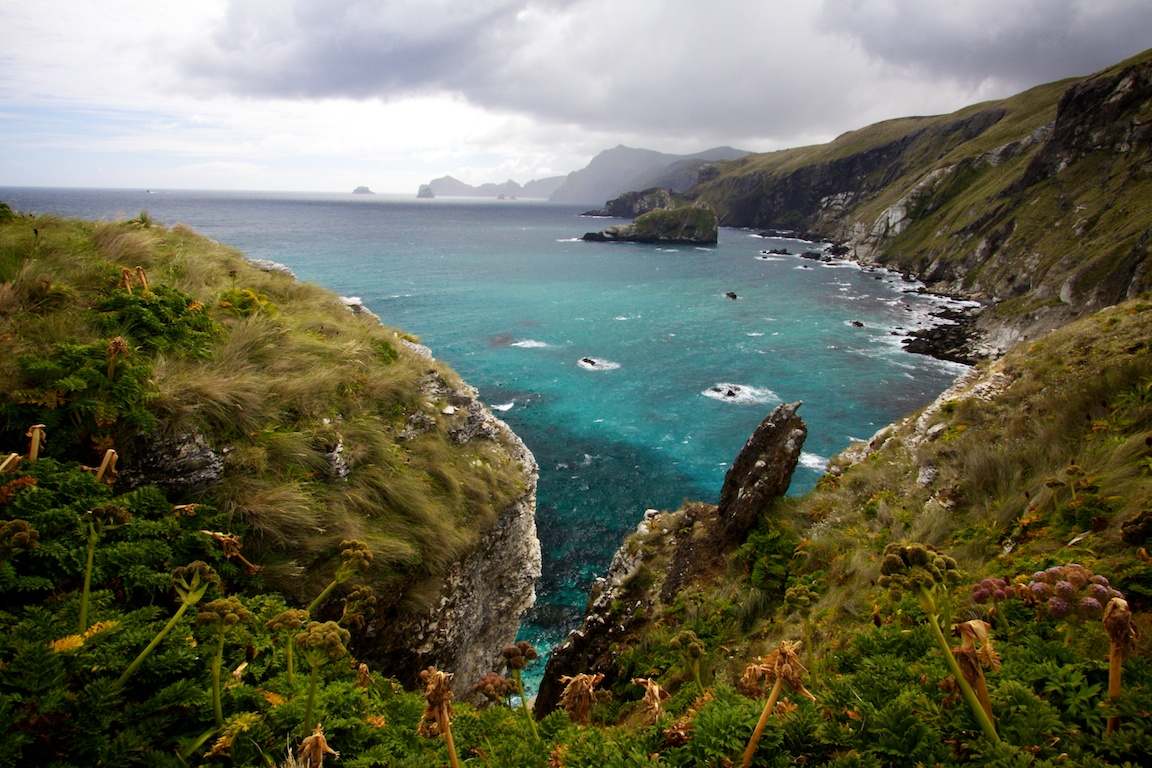Northwest bay, Campbell Island, New Zealand Subantarctic..jpg