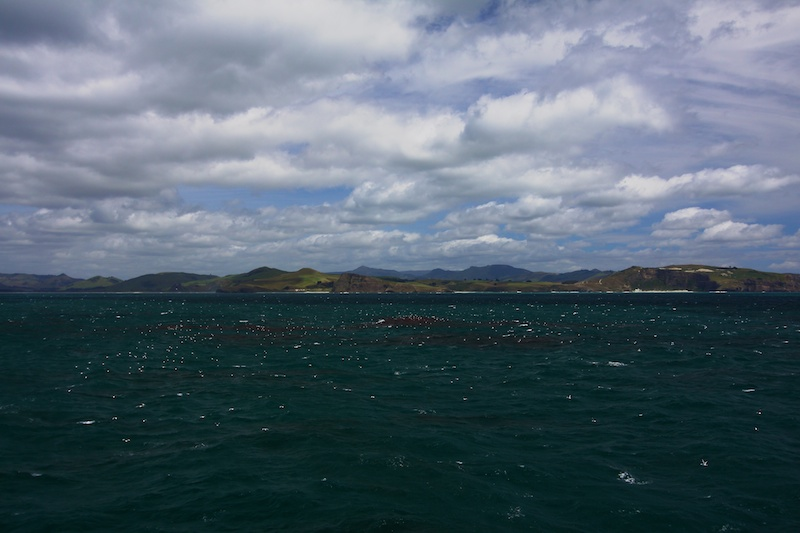 Plumes of krill wells up to the surface off the south coast of NZ.