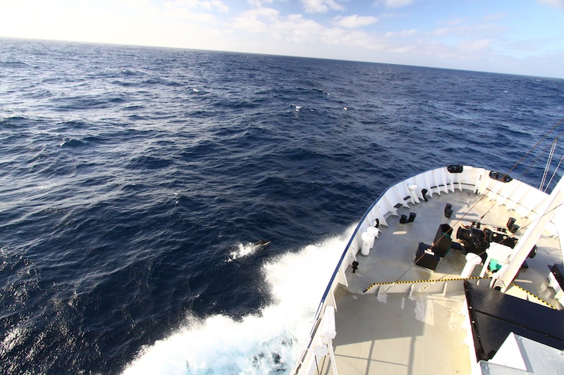 Dusky dolphins ride the bow wave as we head south.