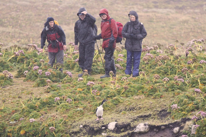 Rainy weather at Enderby Island, Auckland Islands