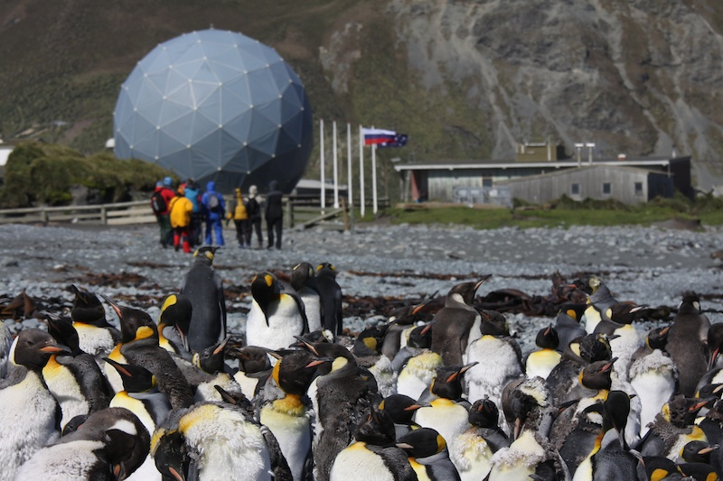 Moulting penguins gather in front of the year-round Australian research station at Macquarie Island.