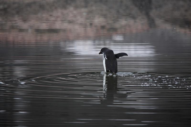 Venturing across a festering pond of penguin crap.