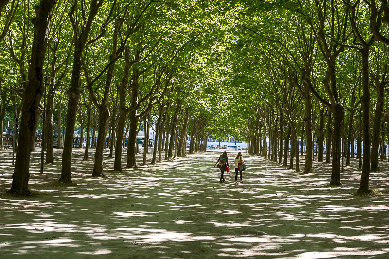 Allées boisées dans le centre ville de Bordeaux. © Sébastien Borda