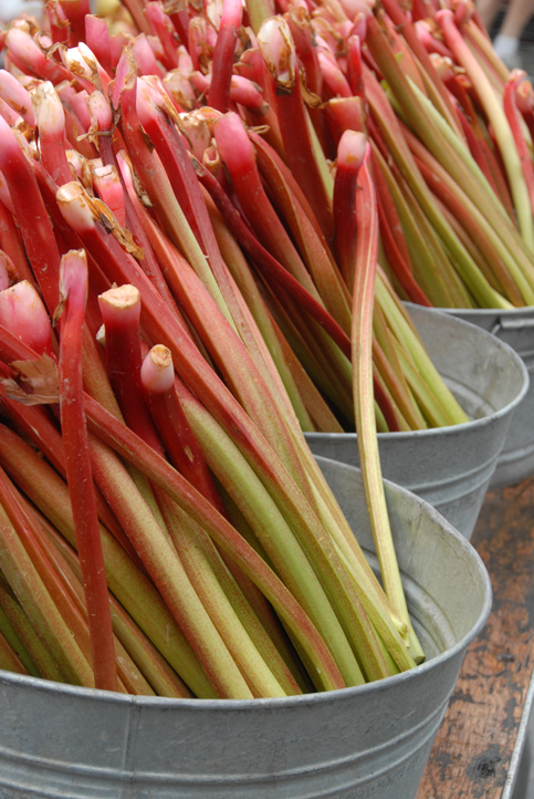 Rhubarbsm_0021.jpg