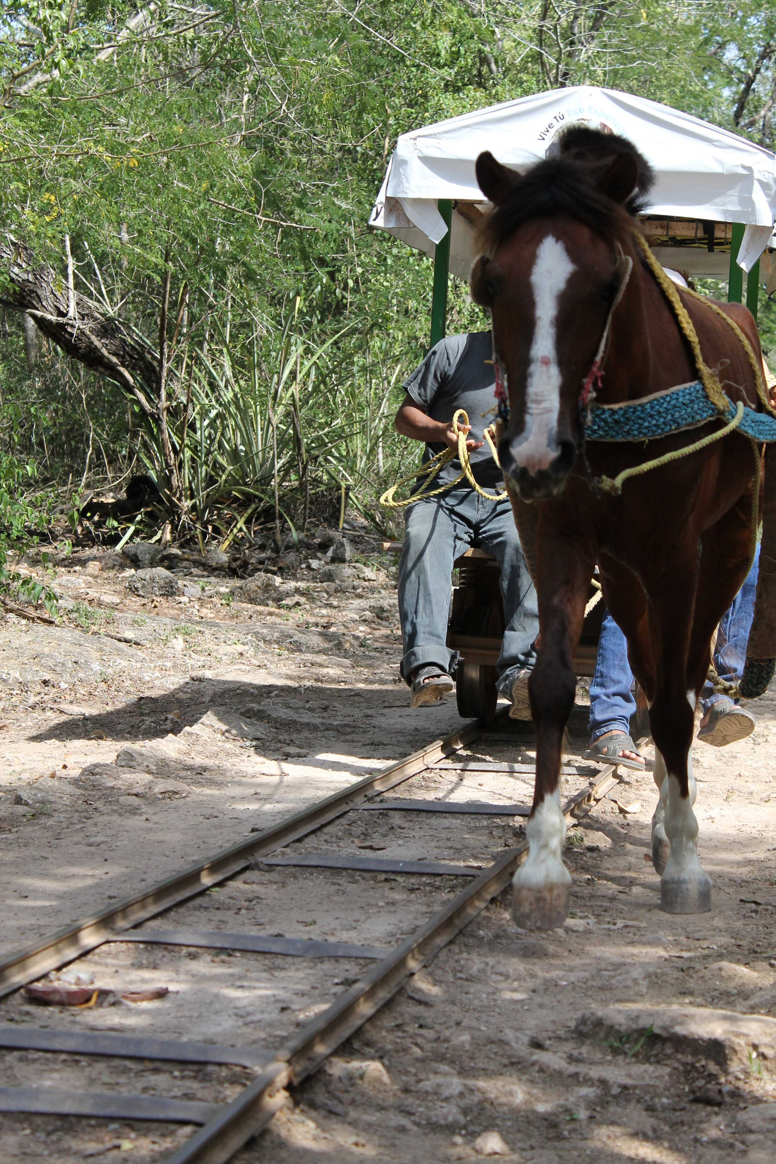 "Horse-drawn rail platform called a ""truck"" takes people into the cenote at Chunkanan"