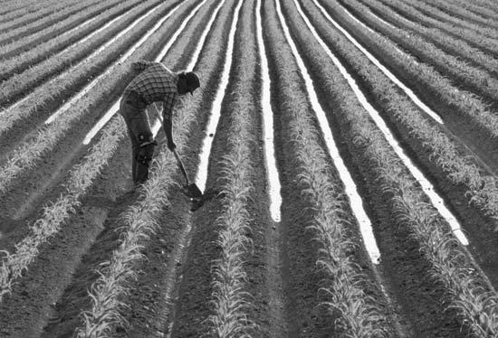 Farmer-in-field.jpg