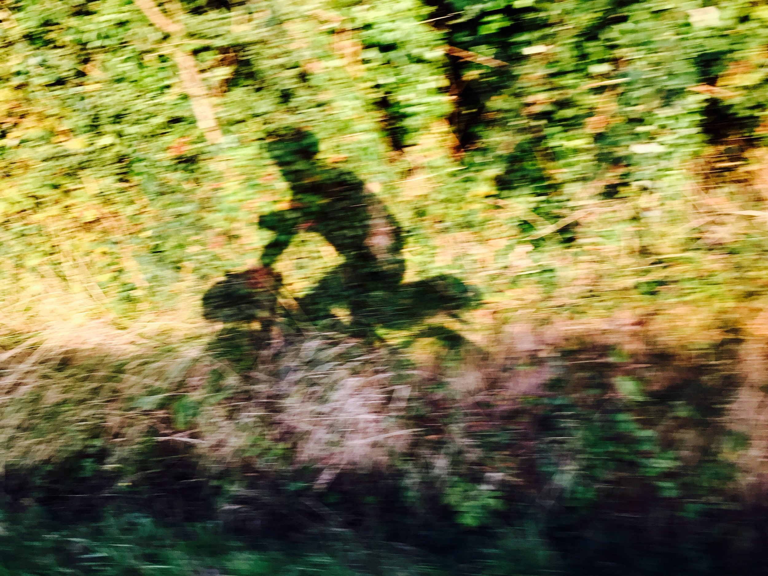 Racing my shadow on the road to Colleville.