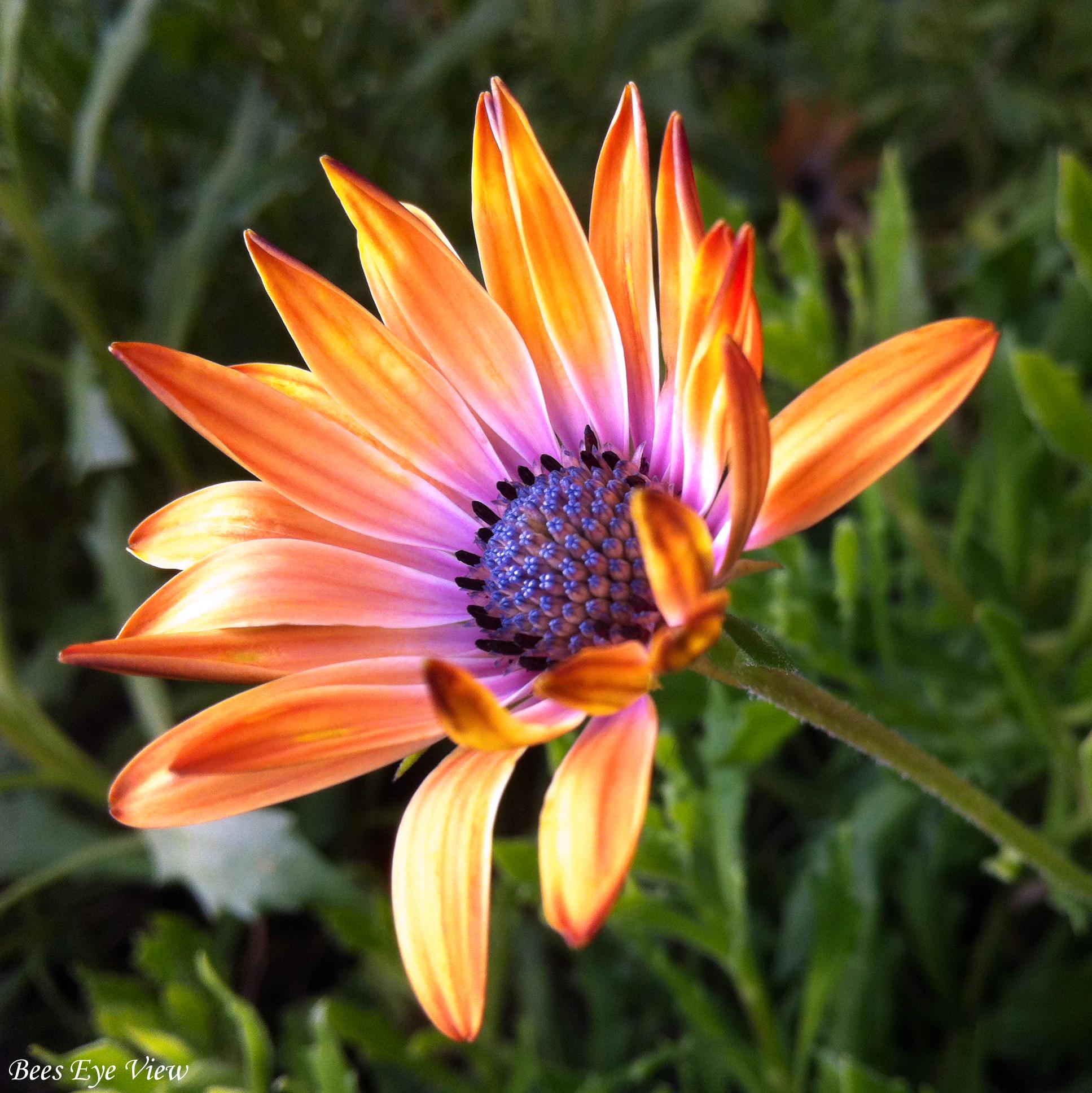 FloralFusion.jpg