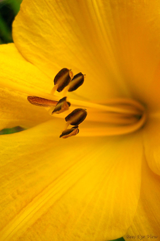 Yellow-Class.jpg