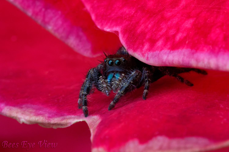 SpiderRed.jpg