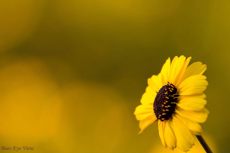 YellowFlowerFace.jpg