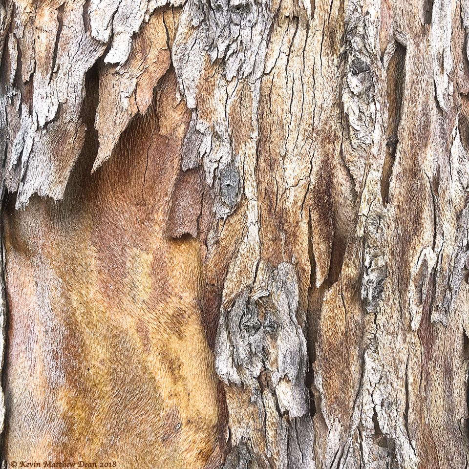 WoodSquare.jpg