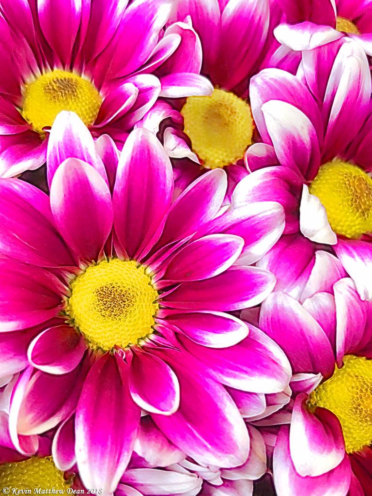 BrightMagentaBlast4web.jpg