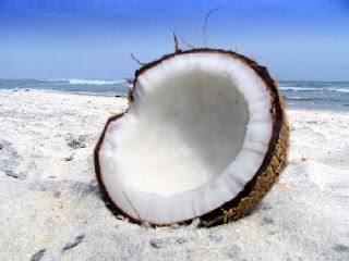 coconut+on+a+beach.jpg