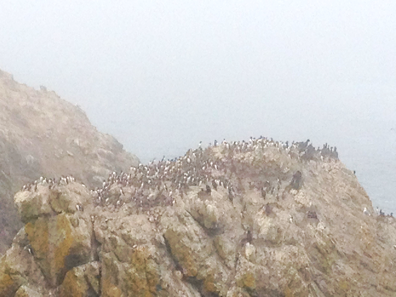 The puffins made a truly horrible screeching noise that will haunt me the rest of my days.