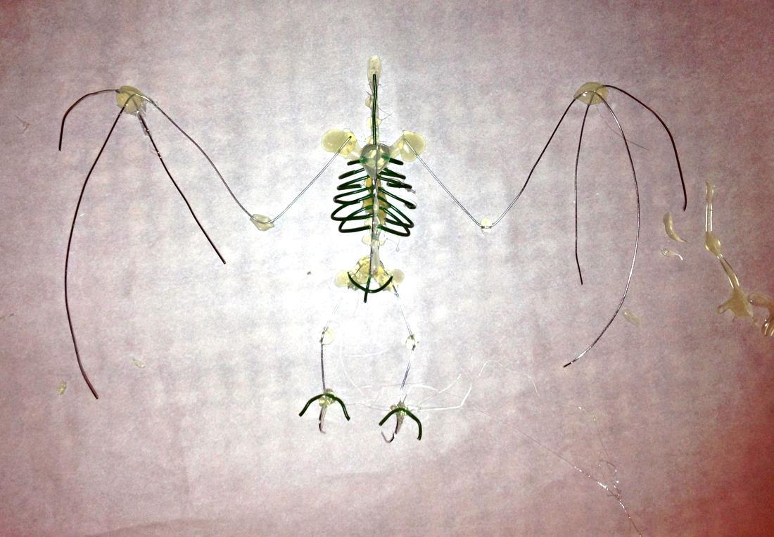 diy_bat_skeleton_wire.jpg