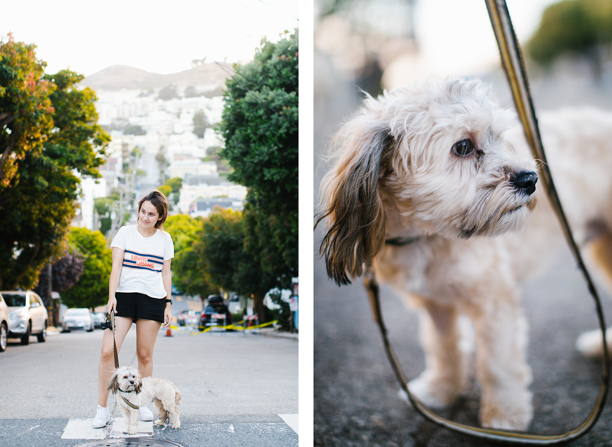 San Francisco dog.jpg