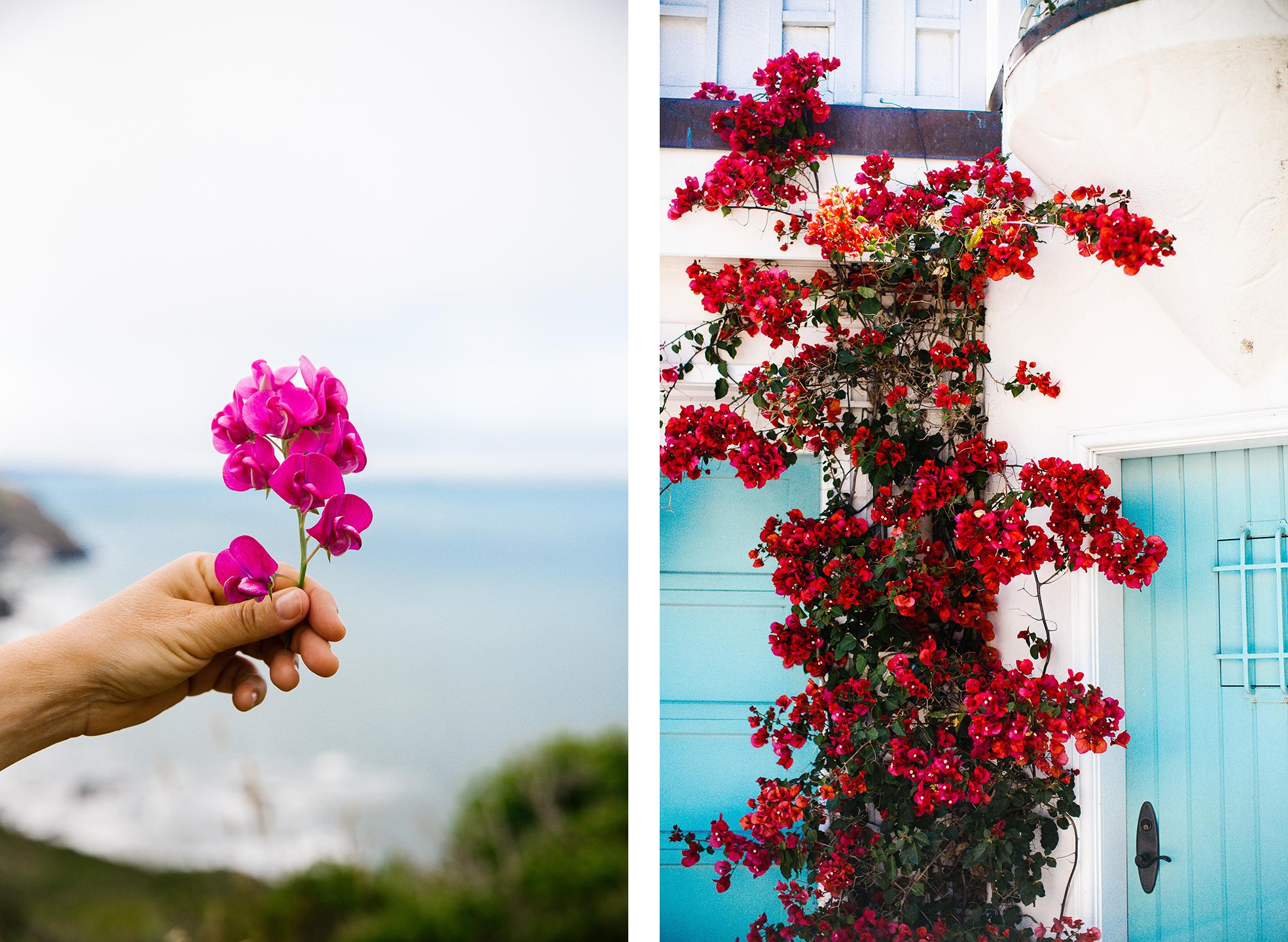 SF flowers.jpg