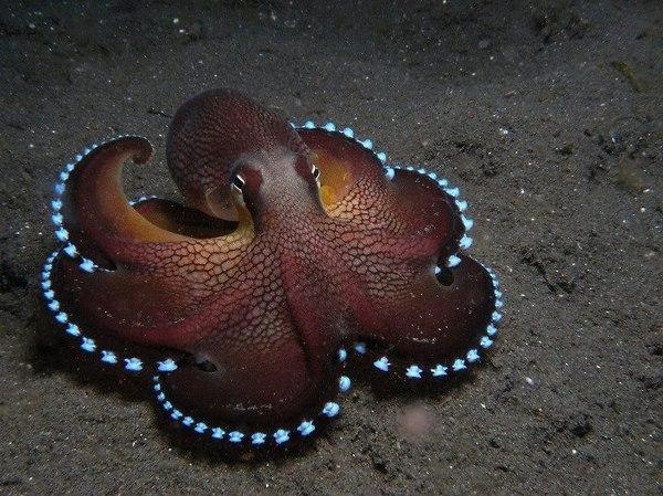 a.baa-Cool-octopus.jpg