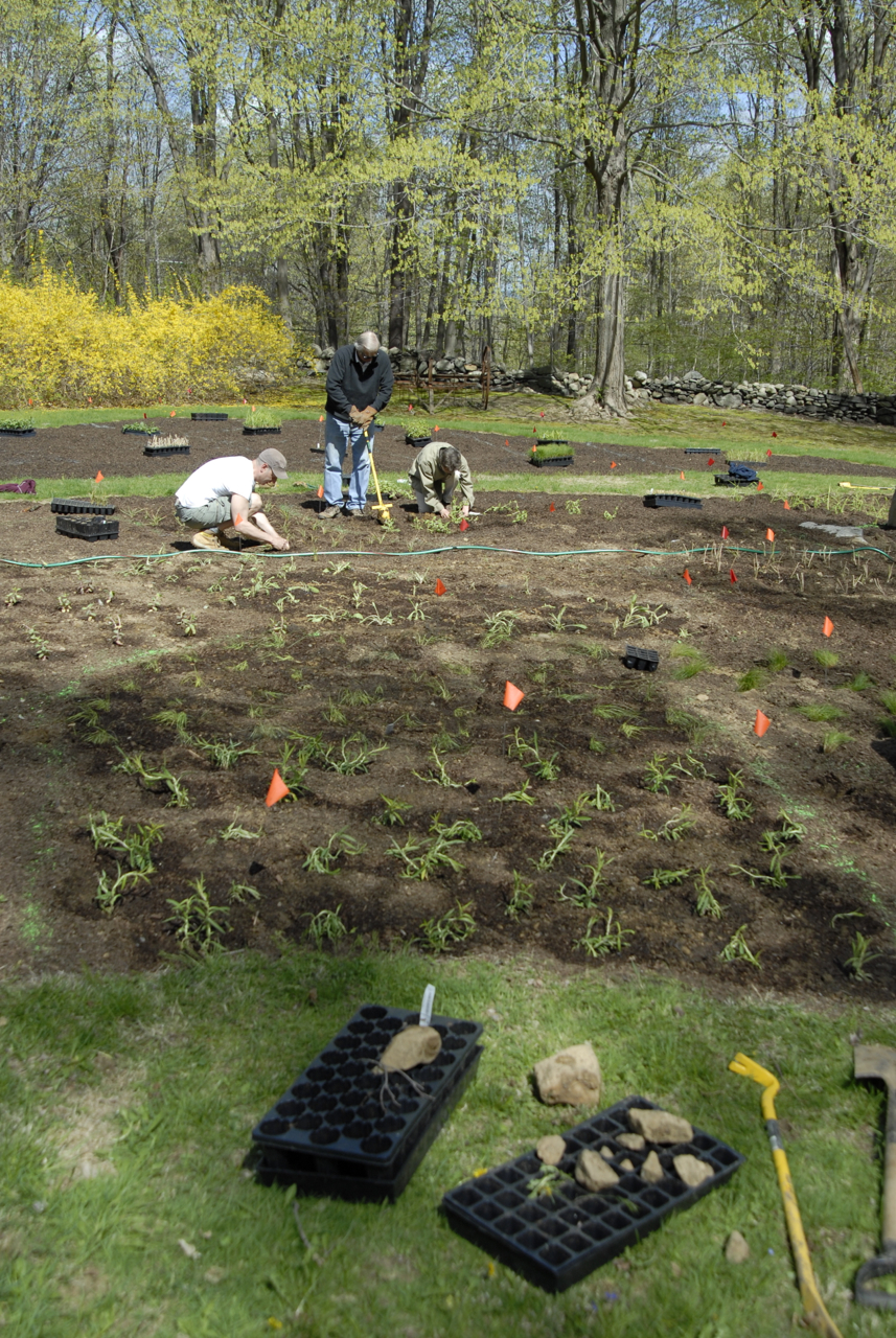 Planting day: 3000 landscape plugs: flowering perennials and native grasses