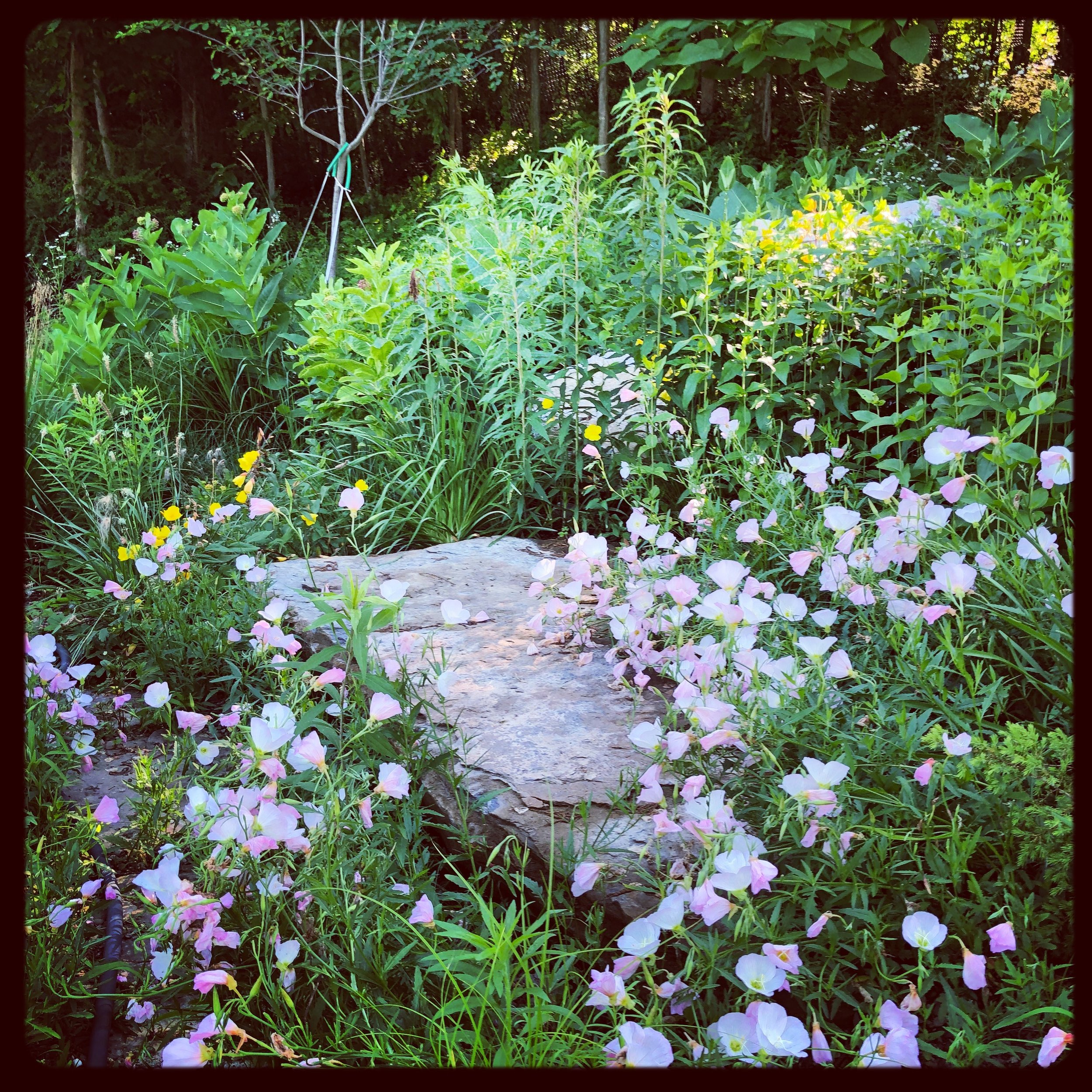 Native Contemplation Garden