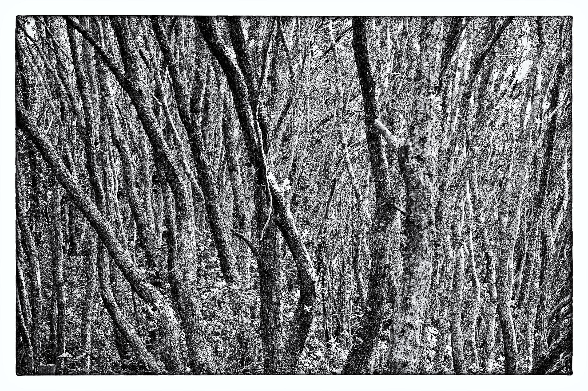 e-FOTOMDC TREES 4265.JPG