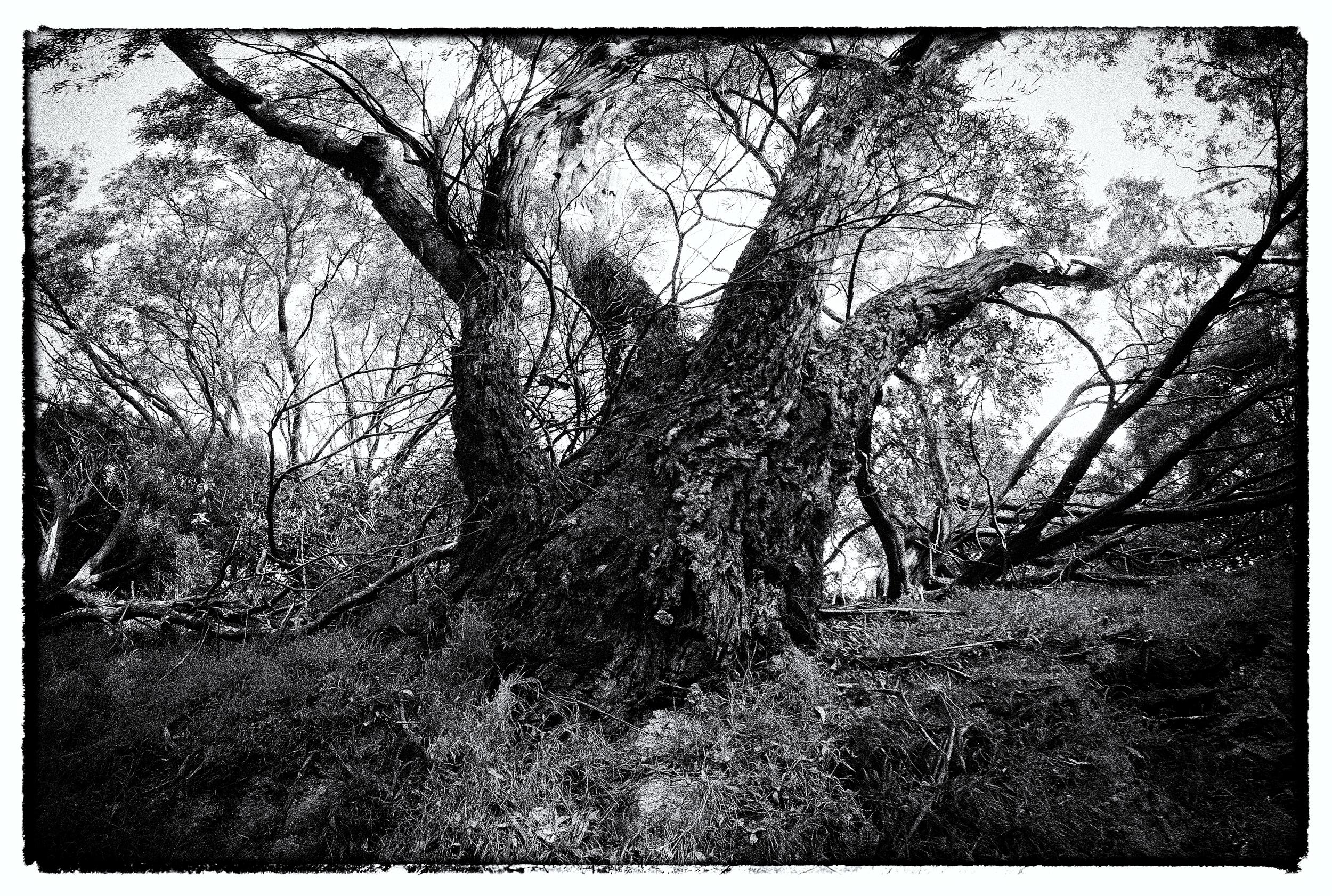 e-FOTOMDC TREES_Pan1.jpg