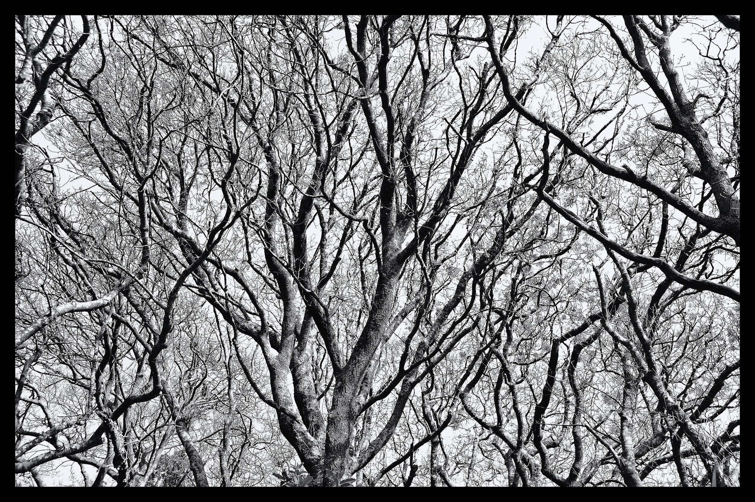 e-FOTOMDC TREES 4398.JPG
