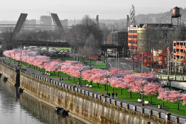 Portland Waterfront Park   by Guy Bodin The Image Factor