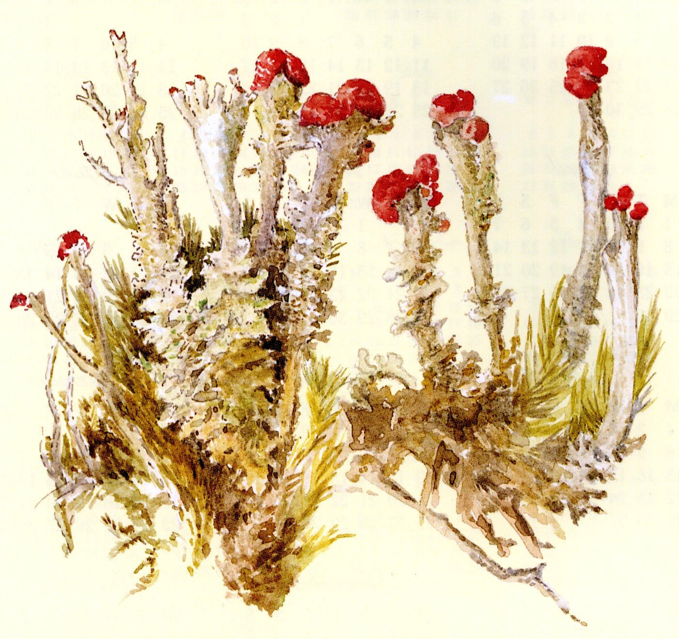 Beatrix Potter was not only one of the greatest children's authors and illustrators ever, she was also one of the greatest botanical illustrators ever, and an accomplished amateur scientist—prevented from publishing her theories on account of her sex.