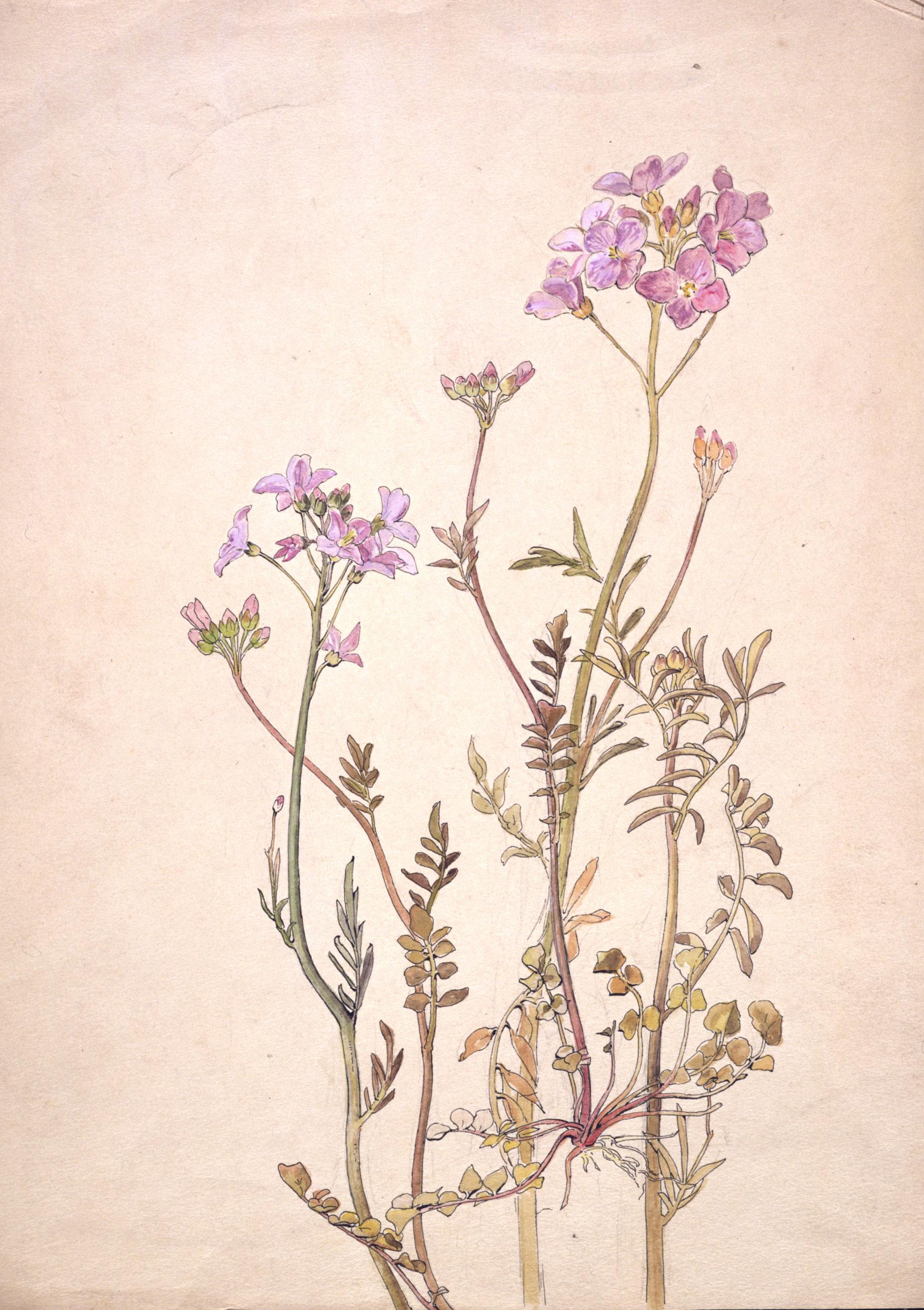 One of Baetrix Potter's beautiful botanical illustrations.