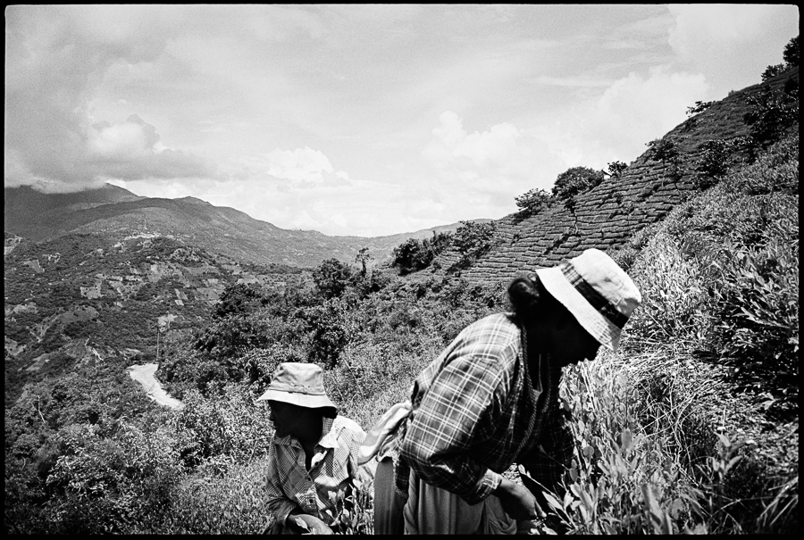"Tatiana Perez, right, and her mother pick coca in the hills surrounding Chicaloma, Bolivia. In the distance, a patchwork of ""cocales"" - or plots of land used for growing coca - covers the mountains."