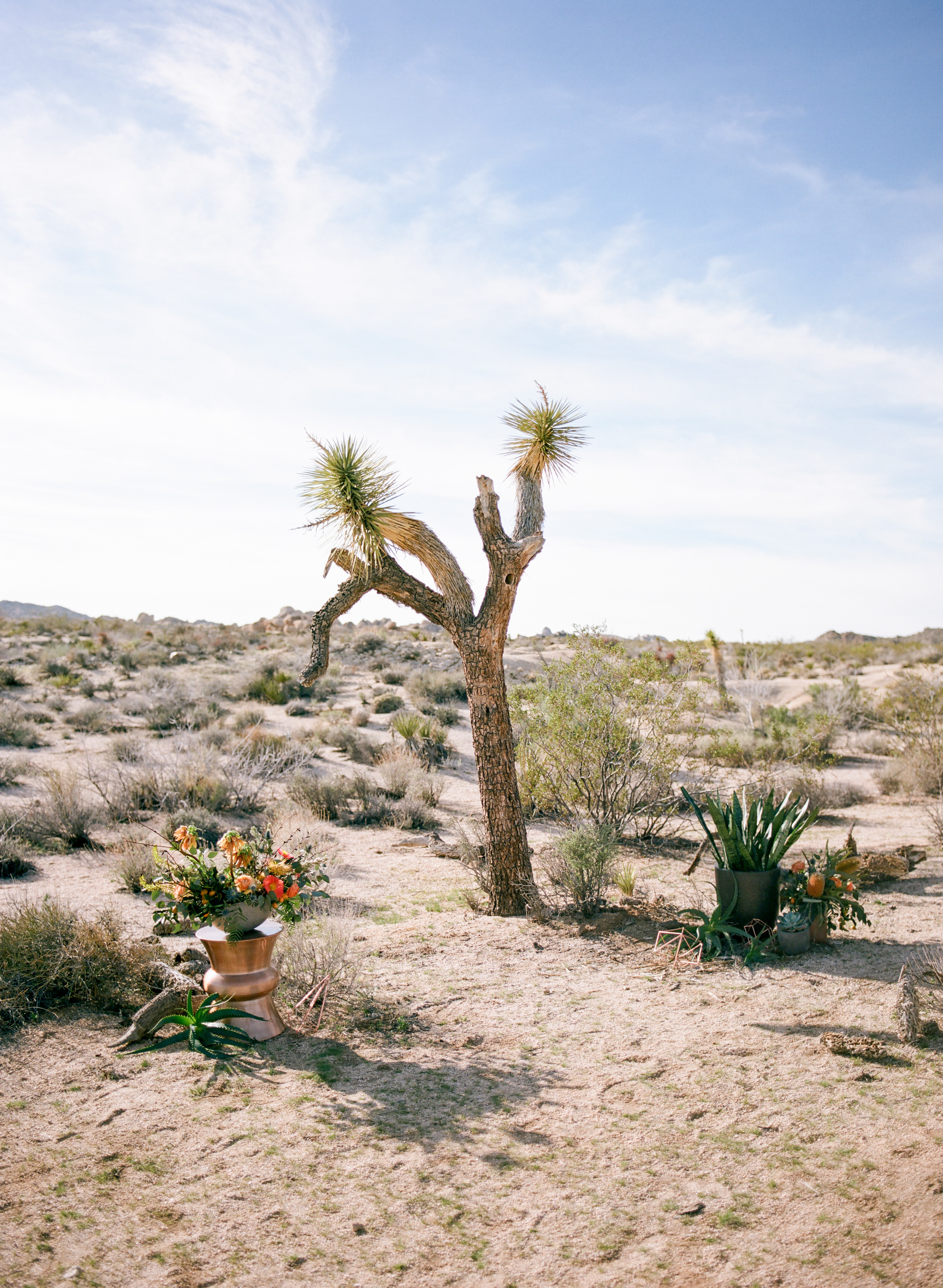 Joshua Tree Elopement-1.jpg