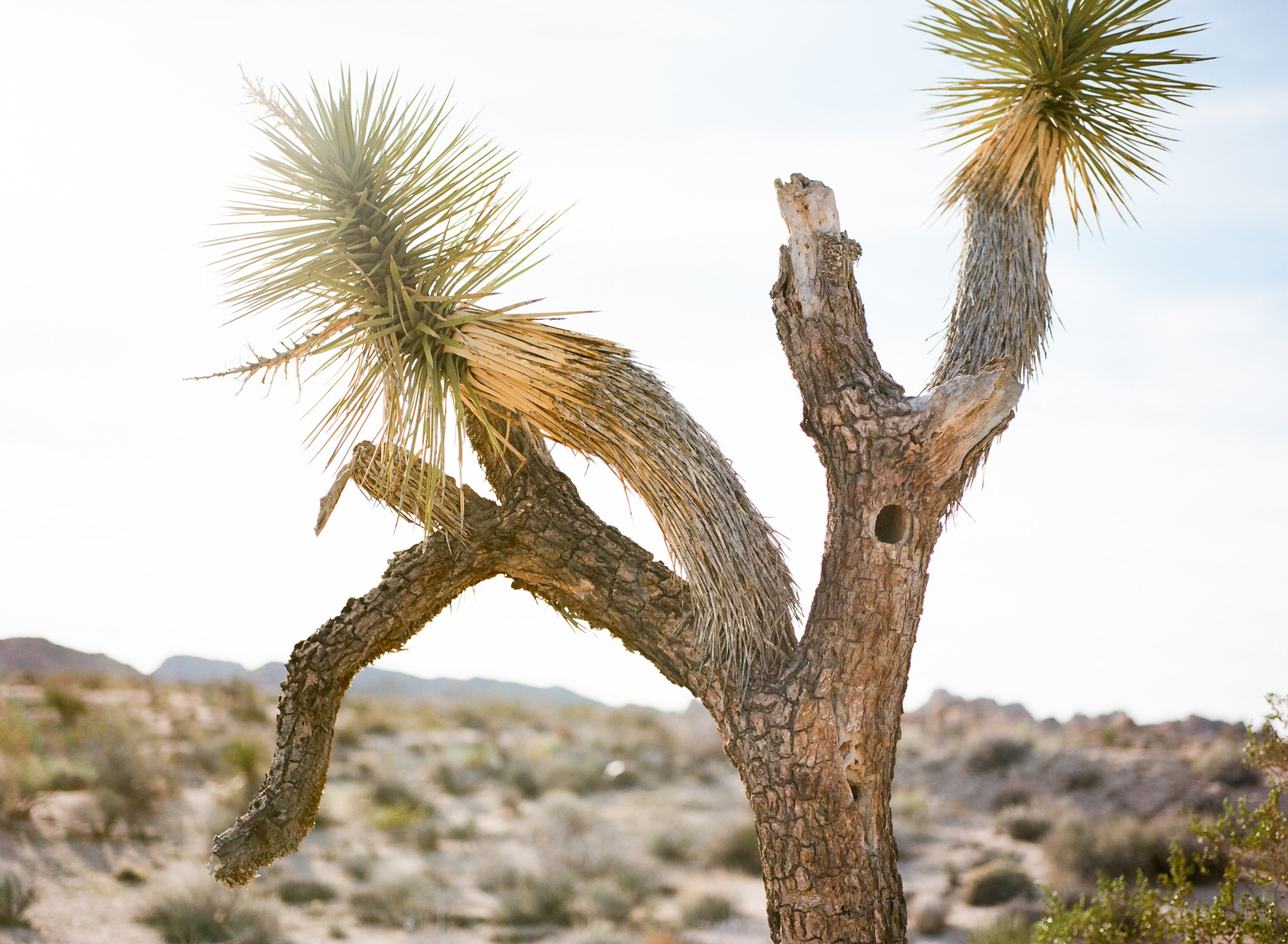 Joshua Tree Elopement-3.jpg