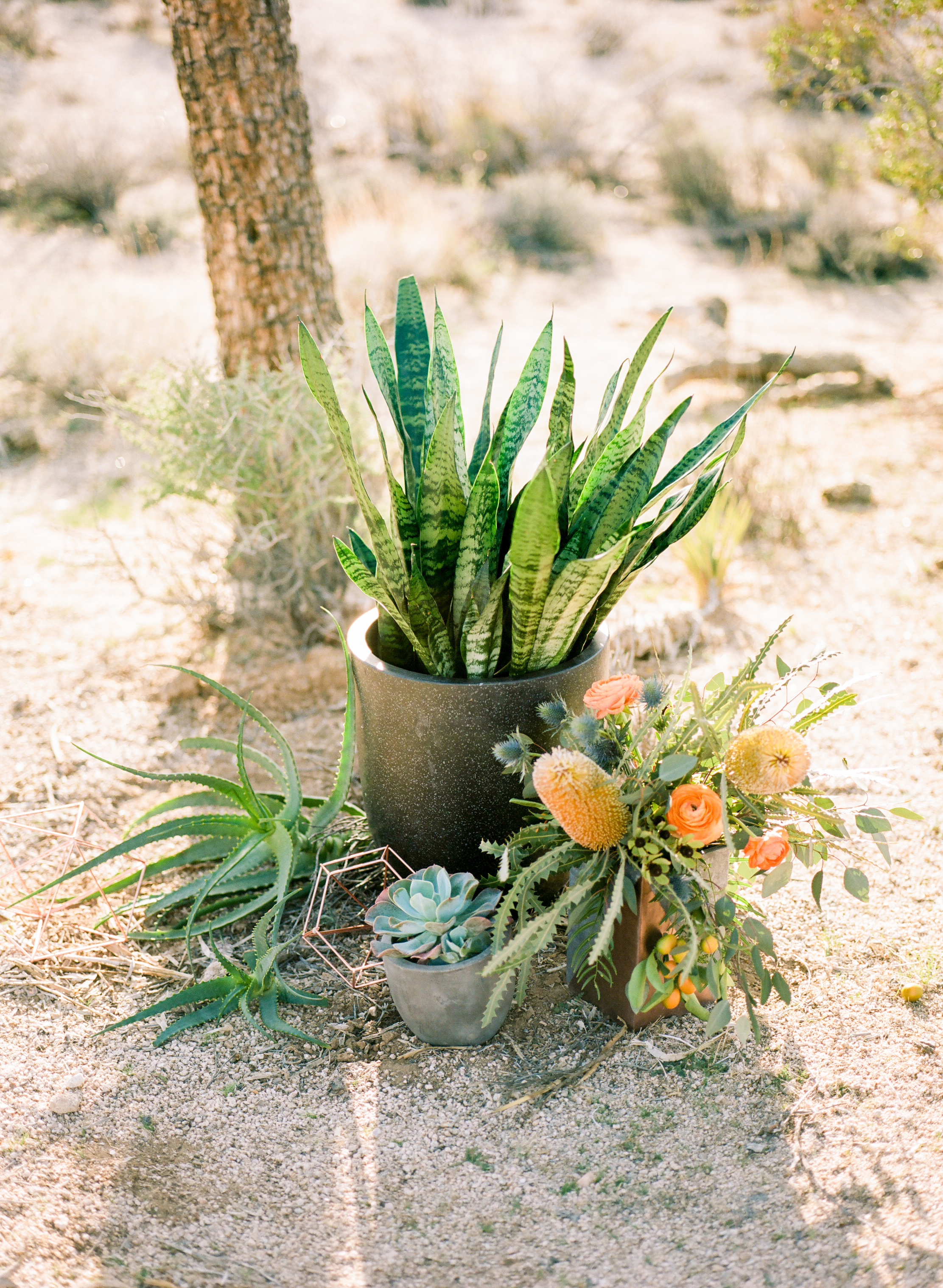 Joshua Tree Elopement-14.jpg